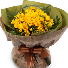 n프리지아꽃다발