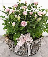 [영국]Rose Basket