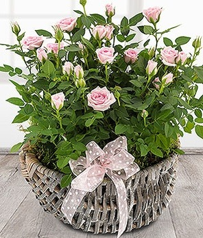[영국]Rose Basket