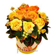 비누꽃-스위트 오렌지