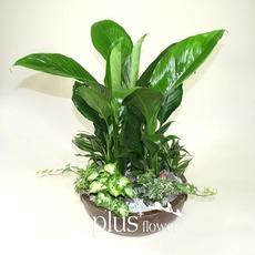 식물모아심기A