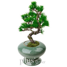 도자기분재소나무