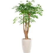 n행복나무A(해피트리)